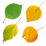 Hojas de otoño aisladas fijadas Fotografía de archivo