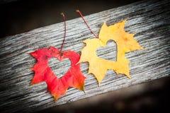 Hojas de otoño con los corazones Fotografía de archivo