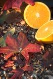 Hojas de otoño con una naranja Fotos de archivo libres de regalías