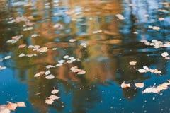 hojas de otoño en el agua Fotografía de archivo