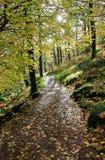 Hojas de otoño en el camino 338 de Watkins Imagen de archivo libre de regalías