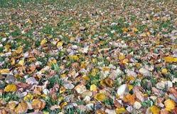 Hojas de otoño en hierba Imagen de archivo