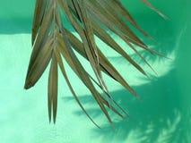 Hojas de palma Fotos de archivo