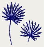 Hojas de palma ilustración del vector