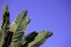 Hojas de palma Foto de archivo libre de regalías
