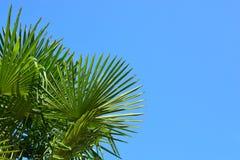 Hojas de palma Fotografía de archivo libre de regalías
