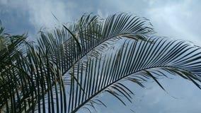 Hojas de palma Foto de archivo