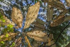 Hojas de palma 2 Imagen de archivo libre de regalías
