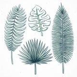 Hojas de palma aisladas hechas a mano en estilo del bosquejo libre illustration