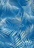 Hojas de palma azules ilustración del vector