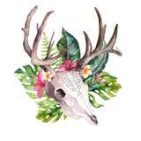 Hojas de palma bohemias del cráneo y del trópico de la vaca de la acuarela Mamíferos occidentales de los ciervos Astas tropicales Fotografía de archivo