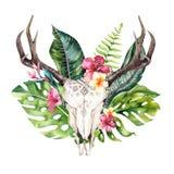 Hojas de palma bohemias del cráneo y del trópico de la vaca de la acuarela Mamíferos occidentales de los ciervos Astas tropicales Foto de archivo