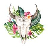 Hojas de palma bohemias del cráneo y del trópico de la vaca de la acuarela Mamíferos occidentales de los ciervos Astas tropicales Fotos de archivo libres de regalías