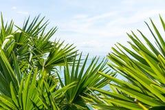 Hojas de palma con el cielo azul y el mar Imagenes de archivo