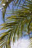 Hojas de palma con el destello de Sun Fotografía de archivo