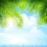 Hojas de palma con luz del sol brillante ilustración del vector