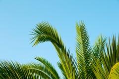 Hojas de palma con un cielo azul como fondo Imágenes de archivo libres de regalías
