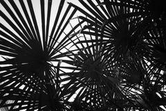 Hojas de palma contra el cielo Un símbolo del resto y del día de fiesta Imagenes de archivo