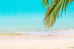 Hojas de palma de coco delante de la playa soñadora en una isla en Mald foto de archivo