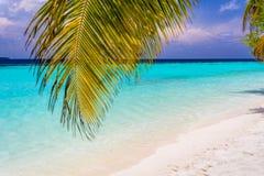 Hojas de palma de coco en una isla en Maldivas fotos de archivo libres de regalías