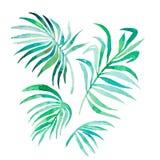 Hojas de palma de la acuarela aisladas en blanco Vector Imagen de archivo