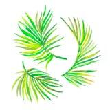 Hojas de palma de la acuarela aisladas en blanco Vector para su diseño Imagen de archivo libre de regalías
