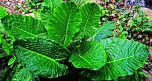 Hojas de palma de la selva tropical Imágenes de archivo libres de regalías