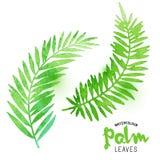 Hojas de palma del Watercolour Imagenes de archivo