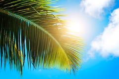 Hojas de palma en fondo del cielo azul el backgroundPalm tropical del concepto de la playa de los días de fiesta del fin de seman imagen de archivo libre de regalías