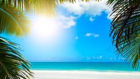 Hojas de palma en fondo del cielo azul el backgroundPalm tropical del concepto de la playa de los días de fiesta del fin de seman fotos de archivo