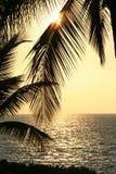 Hojas de palma en la vertical de la puesta del sol Foto de archivo