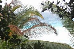 Hojas de palma en un fondo del mar azul Foto de archivo