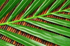 Hojas de palma mojadas Imagen de archivo libre de regalías