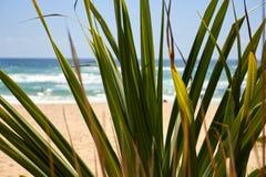 Hojas de palma por la playa con un saltamontes en una rama imagenes de archivo
