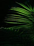 Hojas de palma que brillan intensamente Fotos de archivo