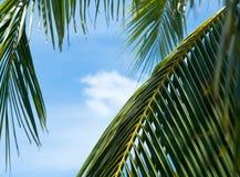 Hojas de palma que toman el placer del sol y del cielo azul Imagen de archivo