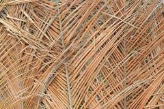 Hojas de palma secas imagen de archivo