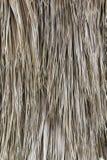 Hojas de palma secas Foto de archivo libre de regalías