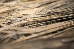 Hojas de palma secas Imágenes de archivo libres de regalías