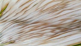 Hojas de palma secas Foto de archivo