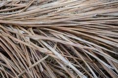 Hojas de palma secas Fotografía de archivo