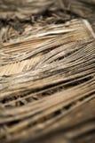 Hojas de palma secas en Agonda, Goa Foto de archivo