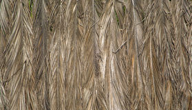 Hojas de palma secas en Agonda, Goa, la India Imágenes de archivo libres de regalías