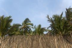 Hojas de palma secas en Agonda, la India Fotografía de archivo libre de regalías