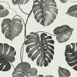 Hojas de palma tópicas ilustración del vector