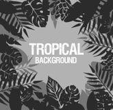 Hojas de palma tropicales Foto de archivo libre de regalías