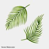 Hojas de palma tropicales de la acuarela ilustración del vector
