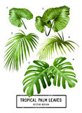 Hojas de palma tropicales del vector Foto de archivo libre de regalías
