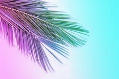 Hojas de palma tropicales en colores vibrantes del neón de la pendiente Fotografía de archivo libre de regalías