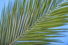 Hojas de palma tropicales en fondo azul en colores pastel fotos de archivo libres de regalías